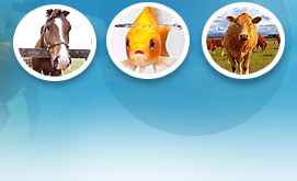 veterinary medicines suppliers, veterinary herbal medicines suppliers