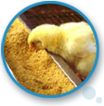 poultry feed supplements, herbal feed supplements